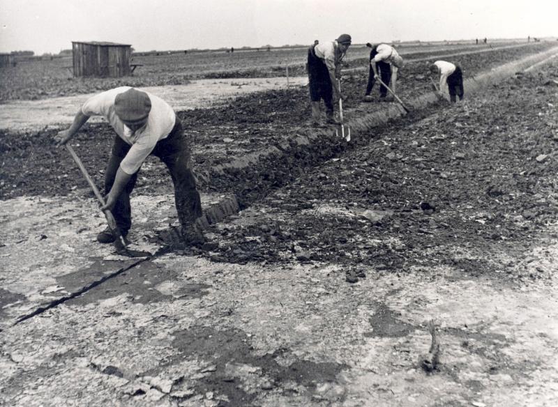 Coniferen uit Flevoland: ijzersterk