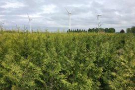Coniferen Kwekerij Flevoland in Biddinghuizen