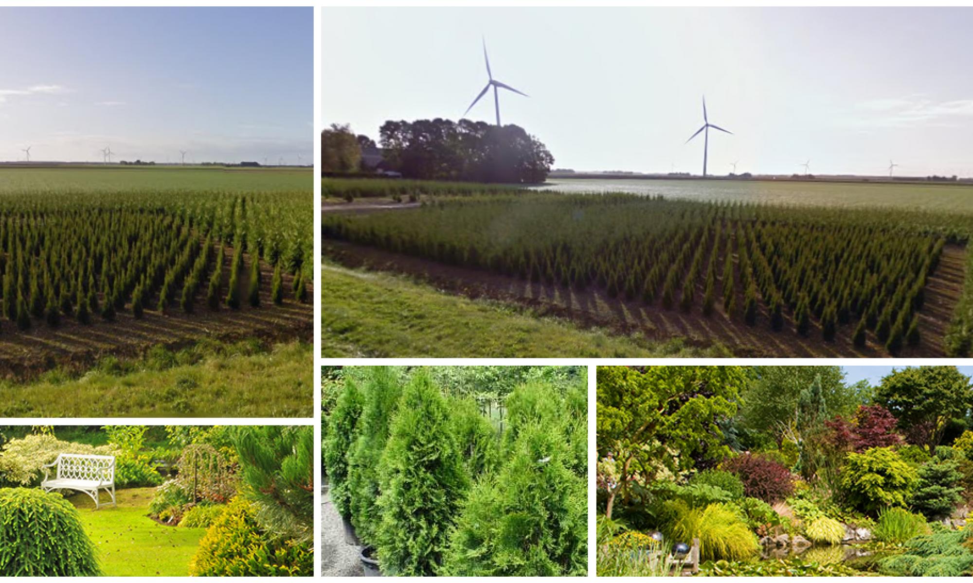Coniferenkwekerij Flevoland