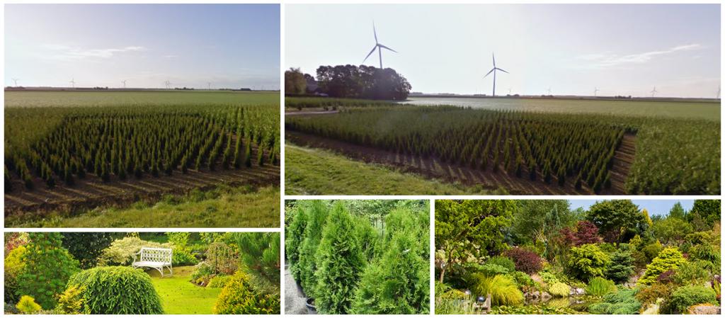 Sterke Kwaliteit Coniferen kwekerij flevoland